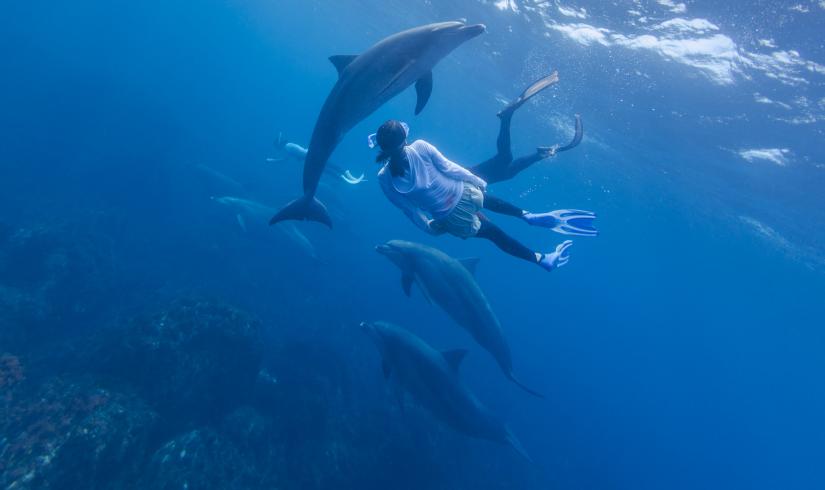 Offrez-vous une expérience avec les dauphins